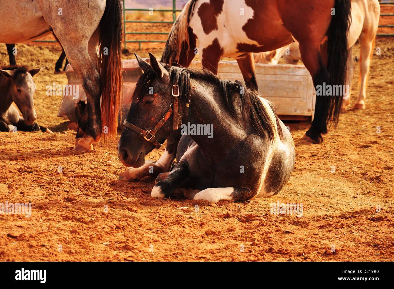 Navajo Horse - Stock Image