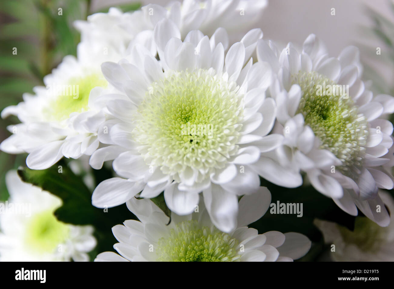 White flowers flower bouquet - Stock Image