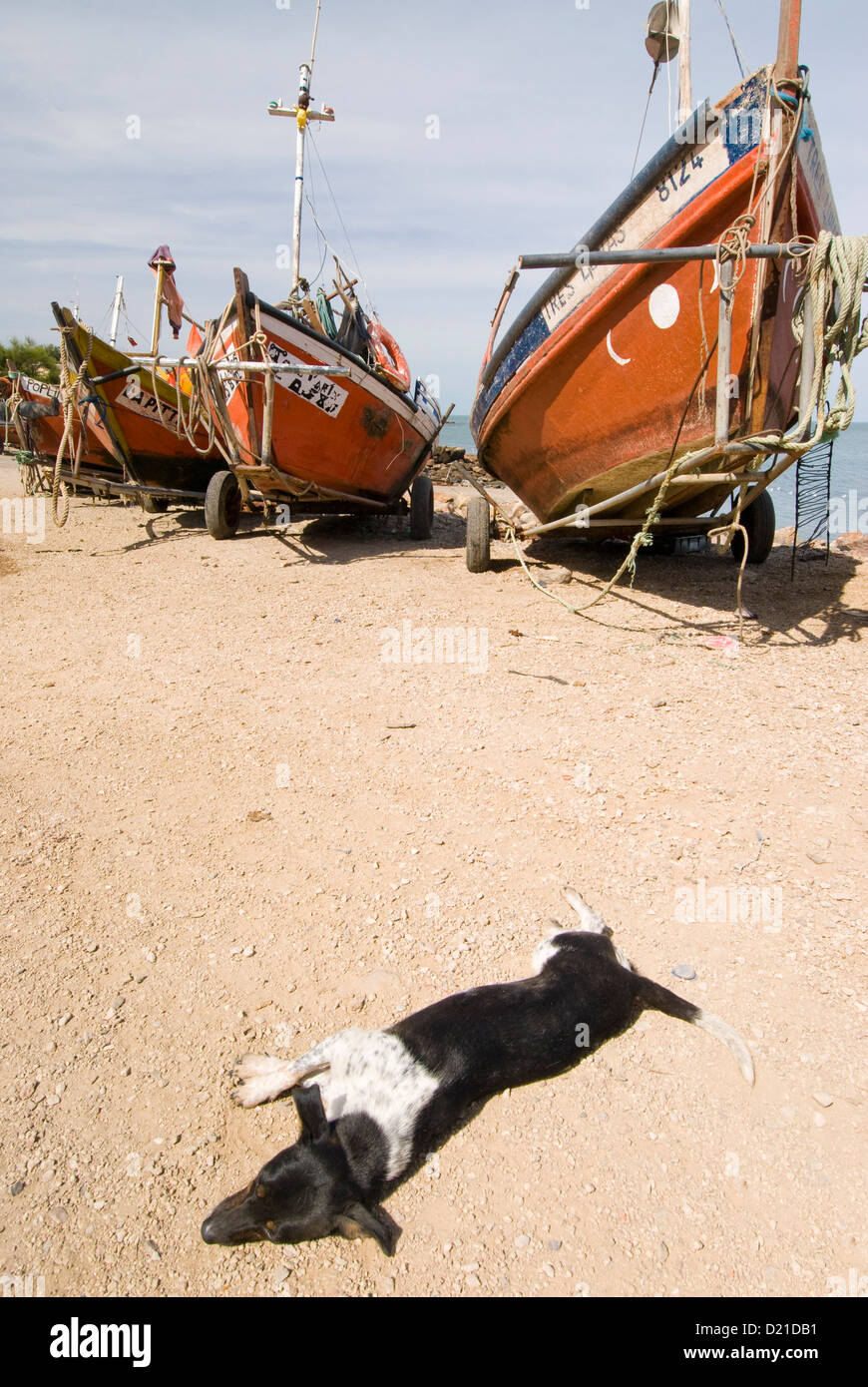 Sleeping dog and fishing boat at fish camp in Piriapolis in Maldonado Uruguay - Stock Image