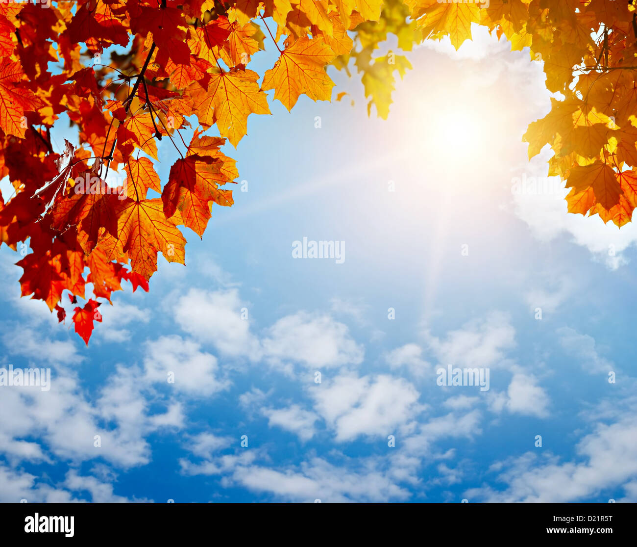 autumn yellow leaves in sun rays and blue sky - Stock Image
