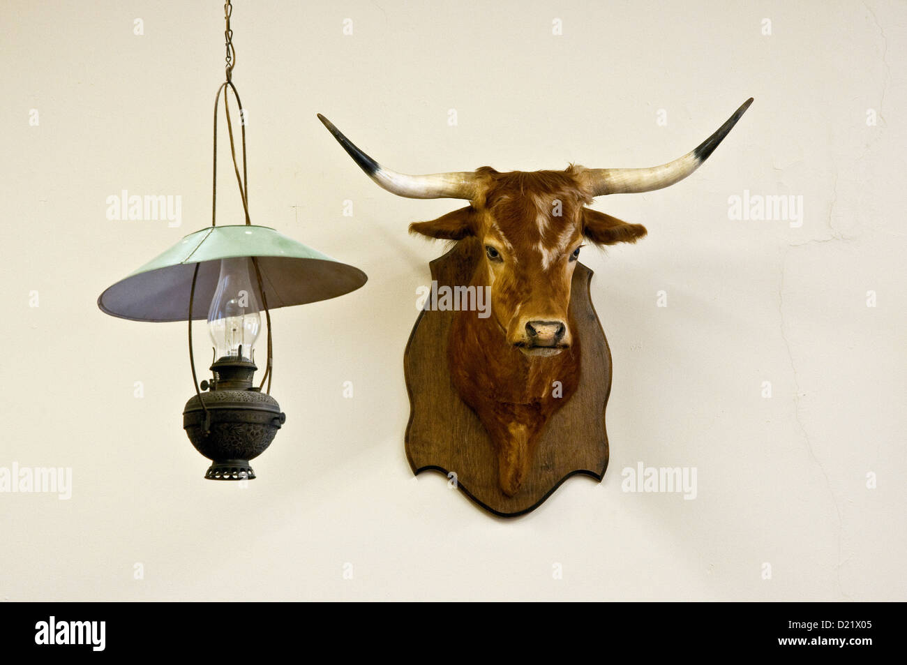 Cattle head and kerosene lamp at the original 1896 Orient Hotel Saloon at West of the Pecos Museum in Pecos, Texas, - Stock Image