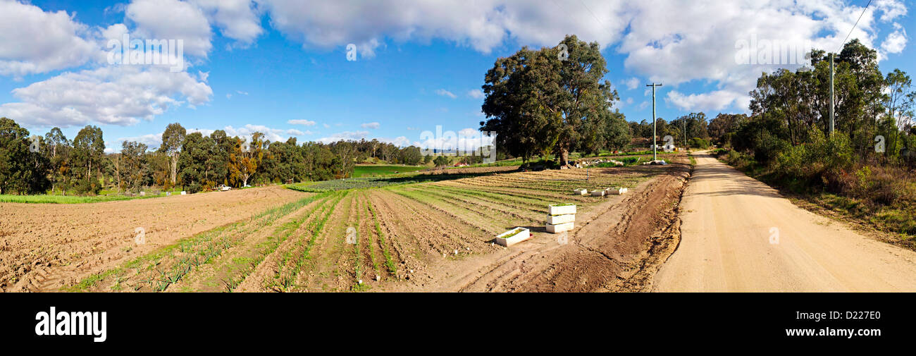 TOWAMBA, Australia - Panorama of a farm in Towamba in rural New South Wales, Australia, with a dirt road running - Stock Image