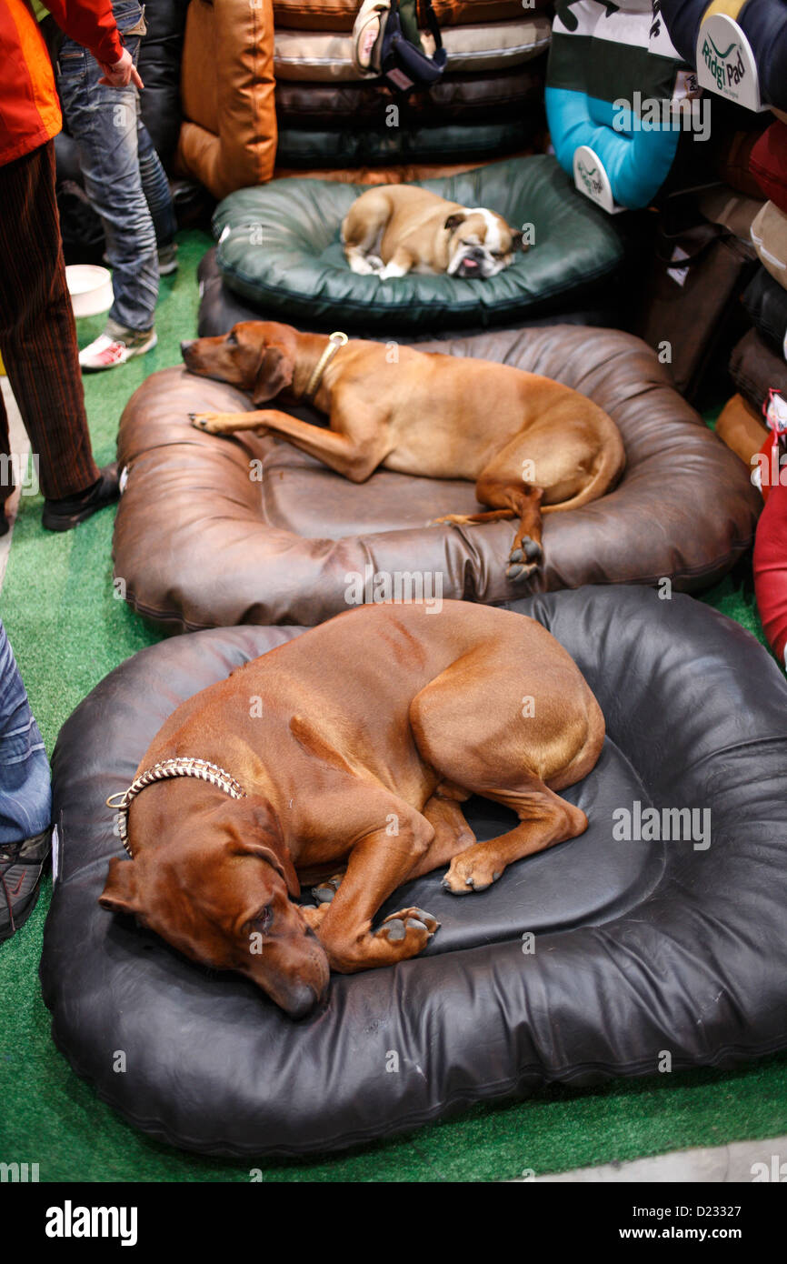 Berlin, Germany, dogs sleeping on couch cushions in a stand - Stock Image