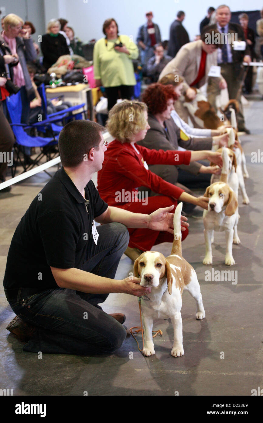 Berlin, Germany, with her beagle dog owners at a show dog breeds - Stock Image
