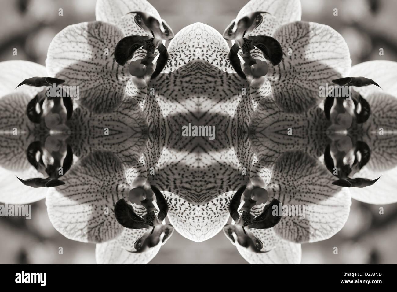 Kaleidoscopic flower pattern - Stock Image