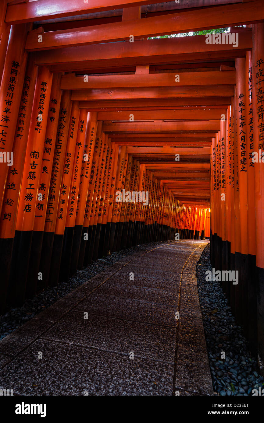 Tunnel created by red tori gates at Fushimi Inari shrine, in Kyoto. - Stock Image