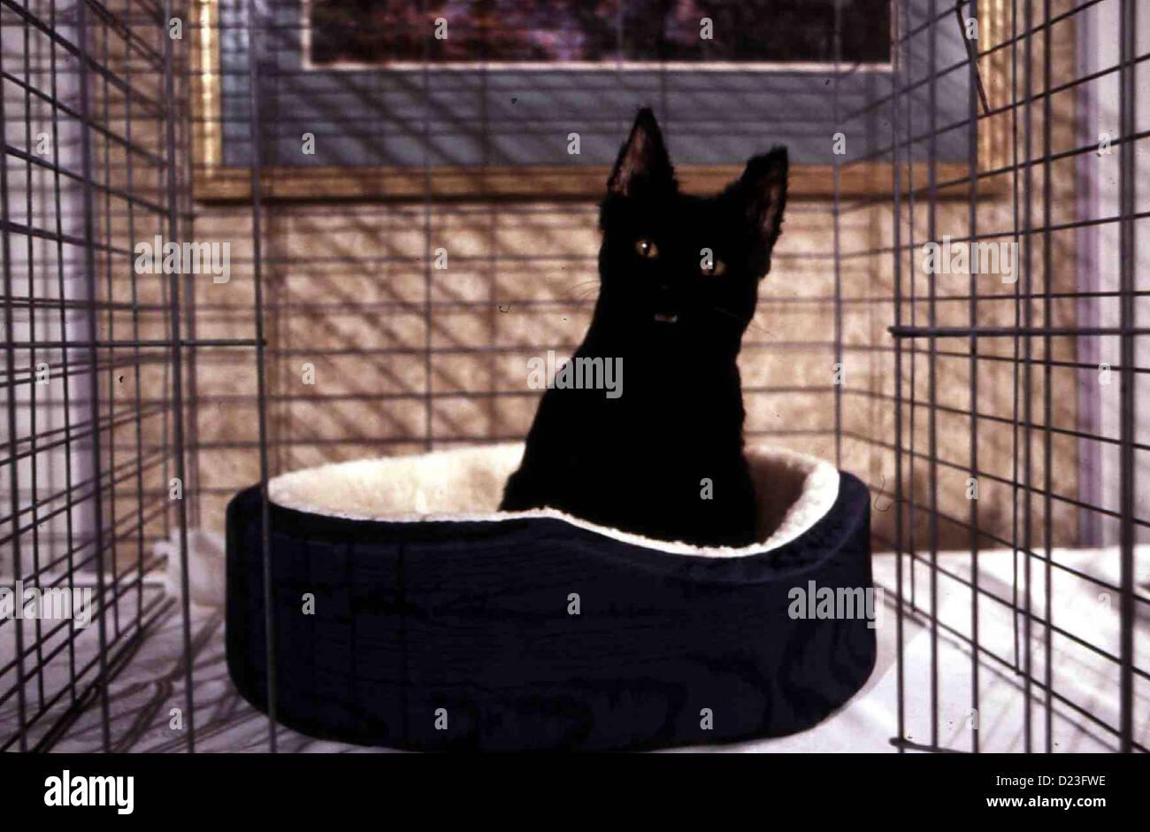 Sabrina - Total Verhext: Katzenjammer  Sabrina Teenage Witch: Cat Showdown  Kater Salem tritt bei einer Katzenshow - Stock Image