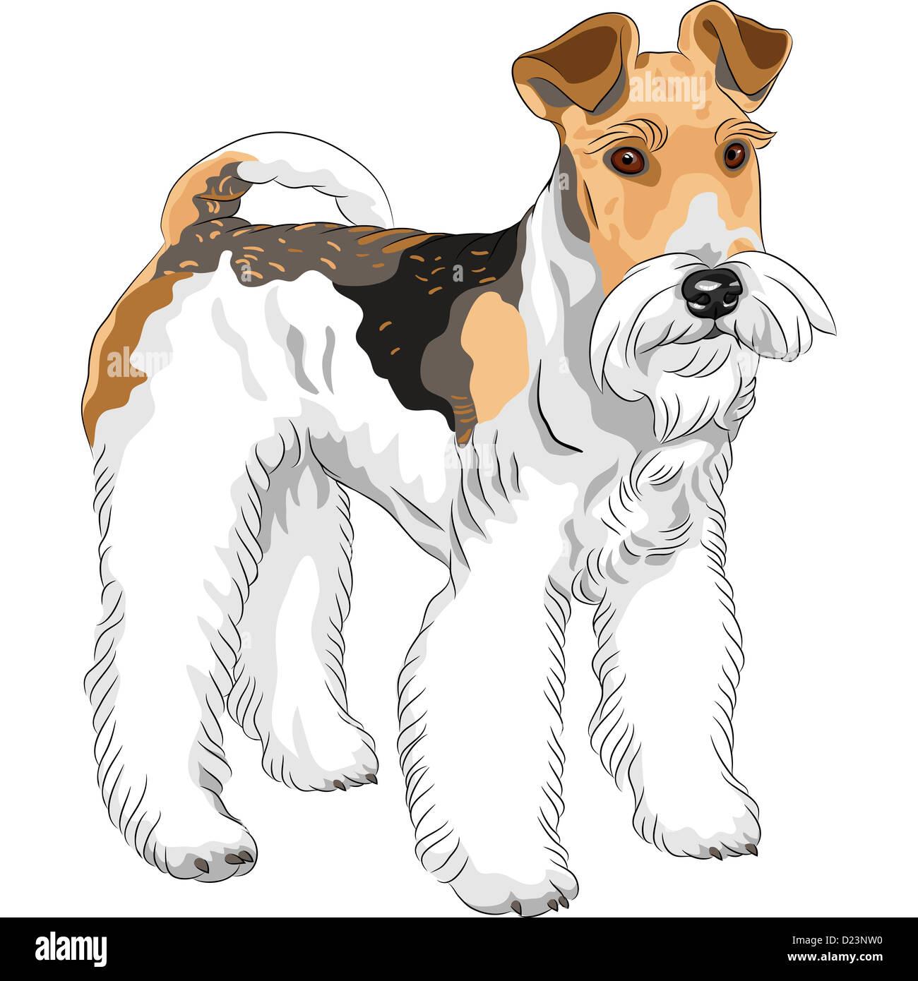Brown Black Fox Terrier Dog Stock Photos & Brown Black Fox Terrier ...
