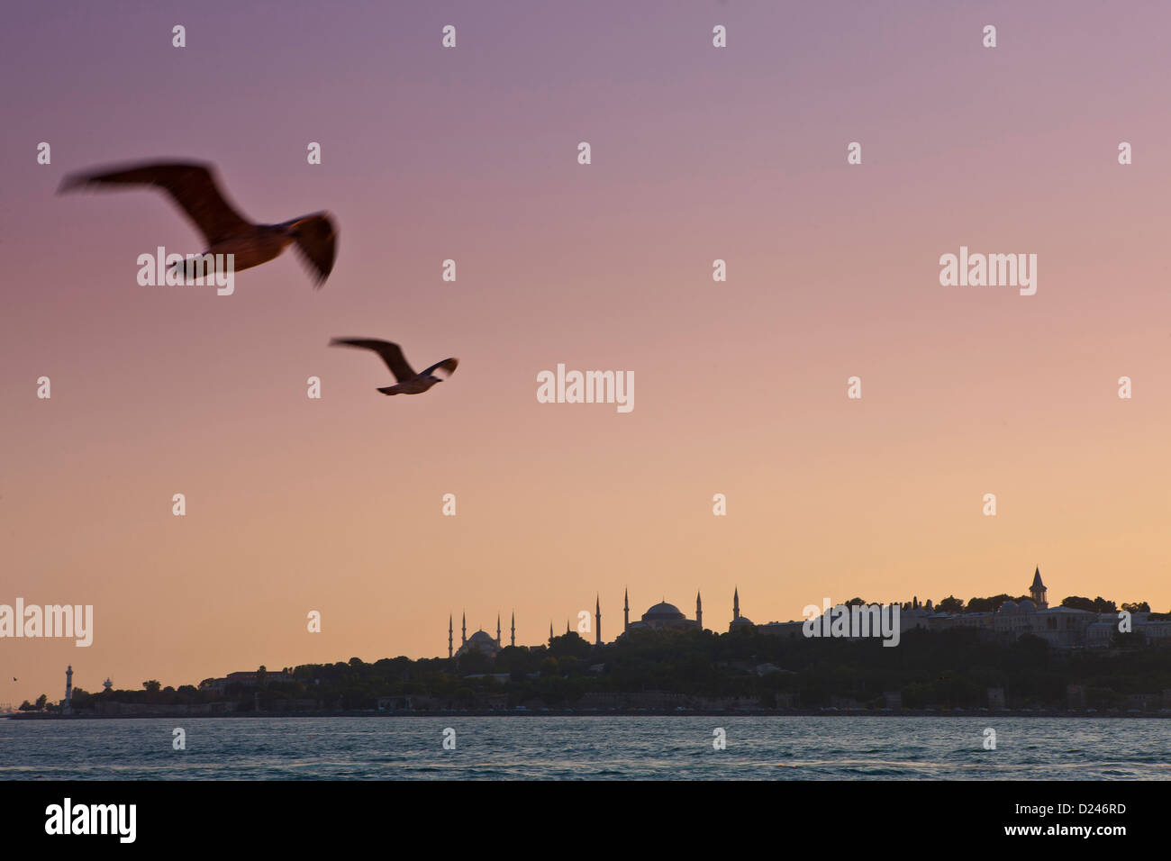 Turkey, Seagulls flying in sky, Blue Mosque in background - Stock Image