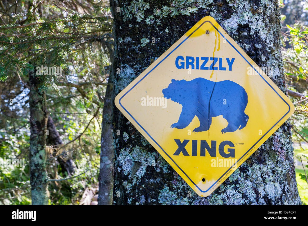 USA, Alaska, Grizzly Xing Sign on tree trunk at Lake Clark National Park and Preserve - Stock Image