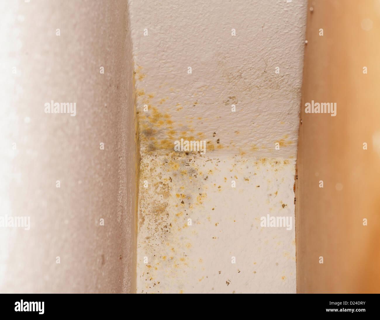 Mold on walls - Stock Image