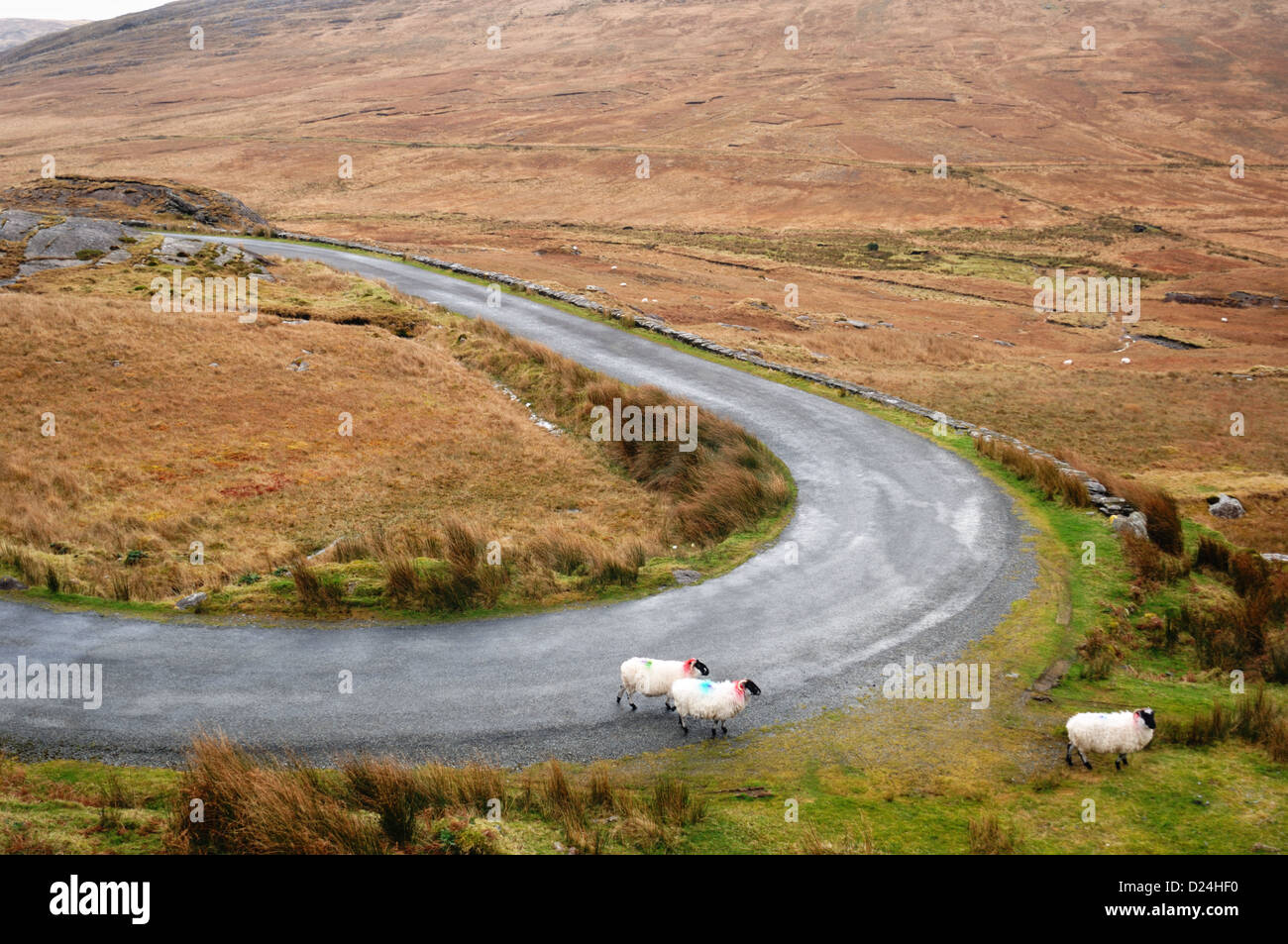 Healy Pass - John Gollop - Stock Image