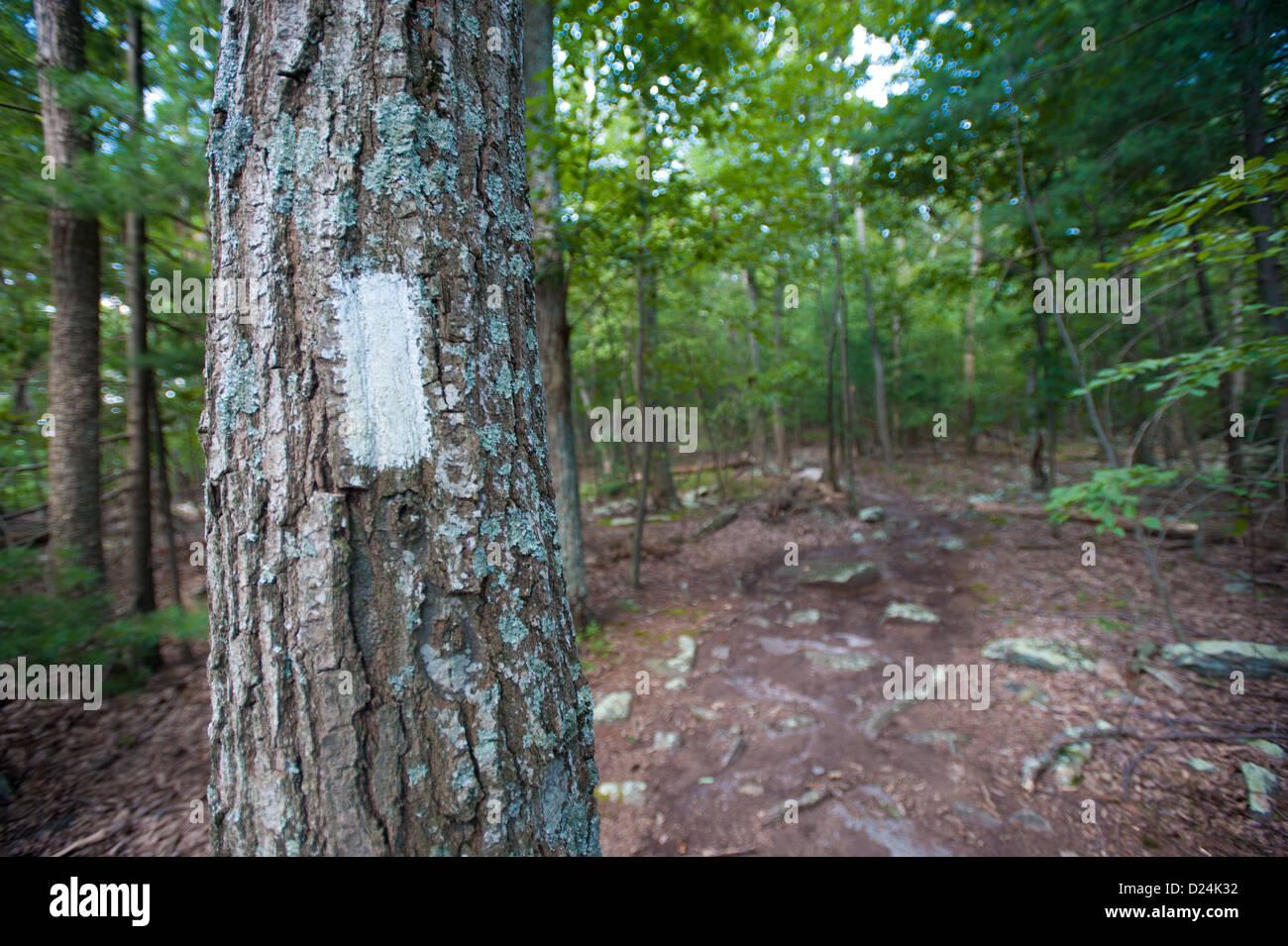 Appalachian trail white tree marker, Pen Mar near Maryland Mason Dixon Line - Stock Image