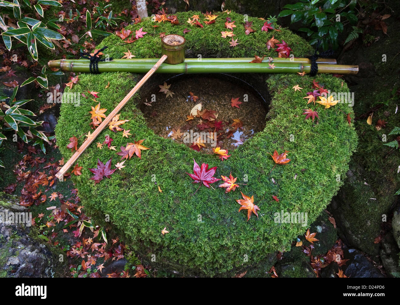 Kyoto, Japan. A tsukubai or water basin for ritual washing or purification at Koto-in Temple, seen in autumn - Stock Image