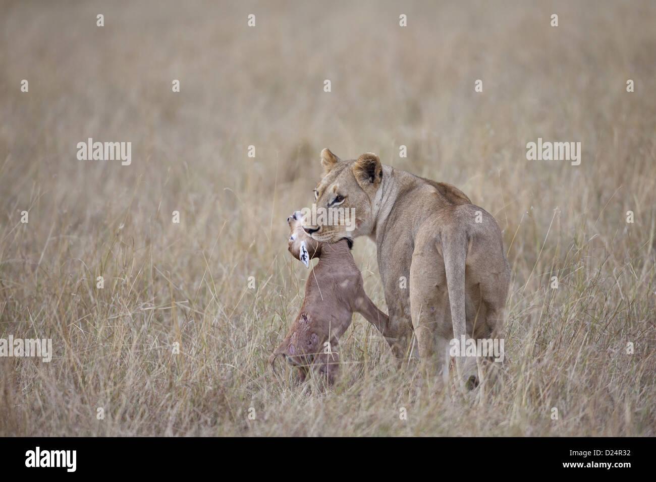ashurnasirpal ii killing lions