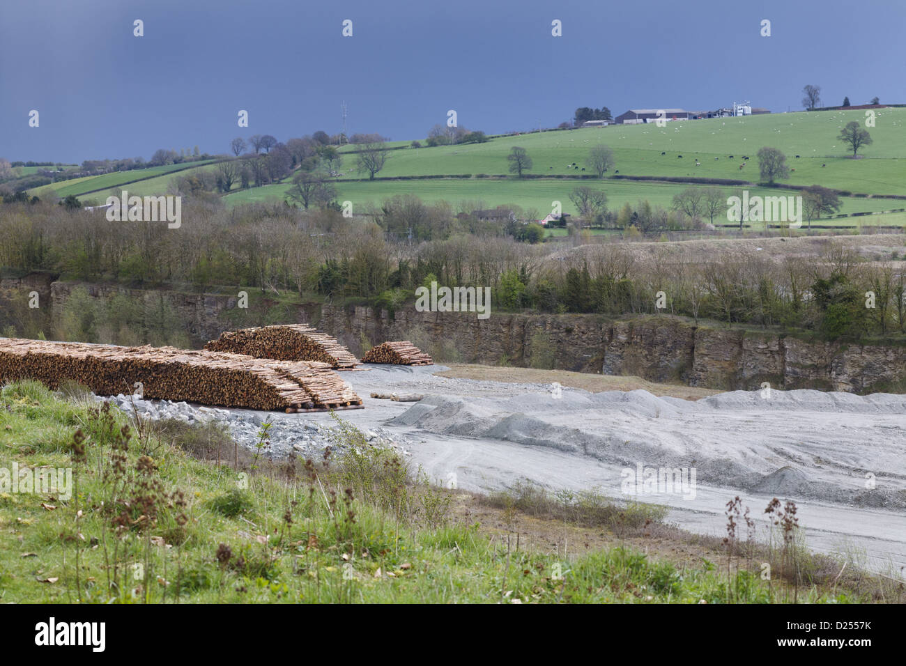 Limestone quarry and stack of felled timber, Lea Quarry South, Wenlock Edge, Shropshire, England, April - Stock Image