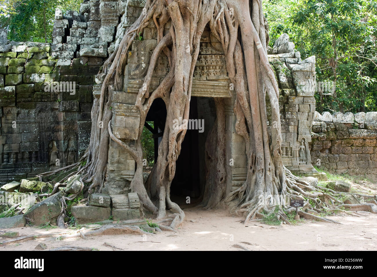 Ruined doorway in the grip of a Strangle Fig tree, Ta Som Temple, Cambodia. - Stock Image