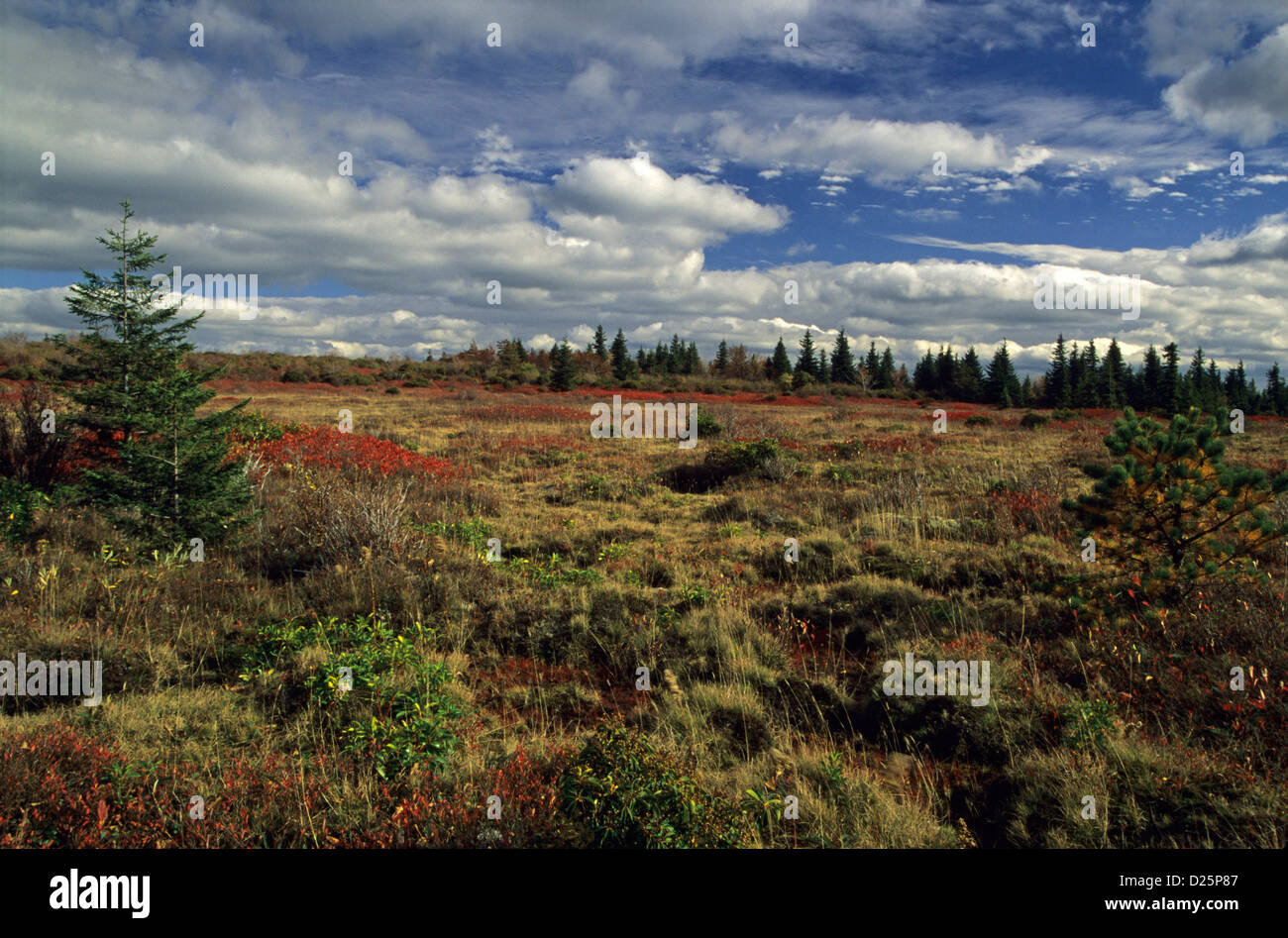 Autumn, Dolly Sods Wilderness, WV - Stock Image