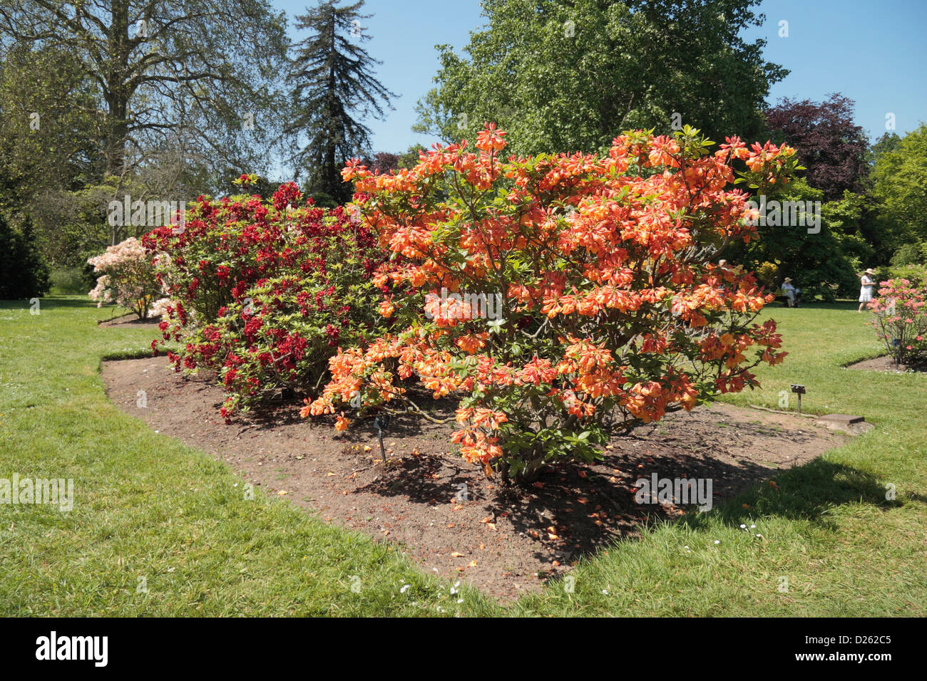 Orange Botanic Garden Stock Photos & Orange Botanic Garden Stock ...
