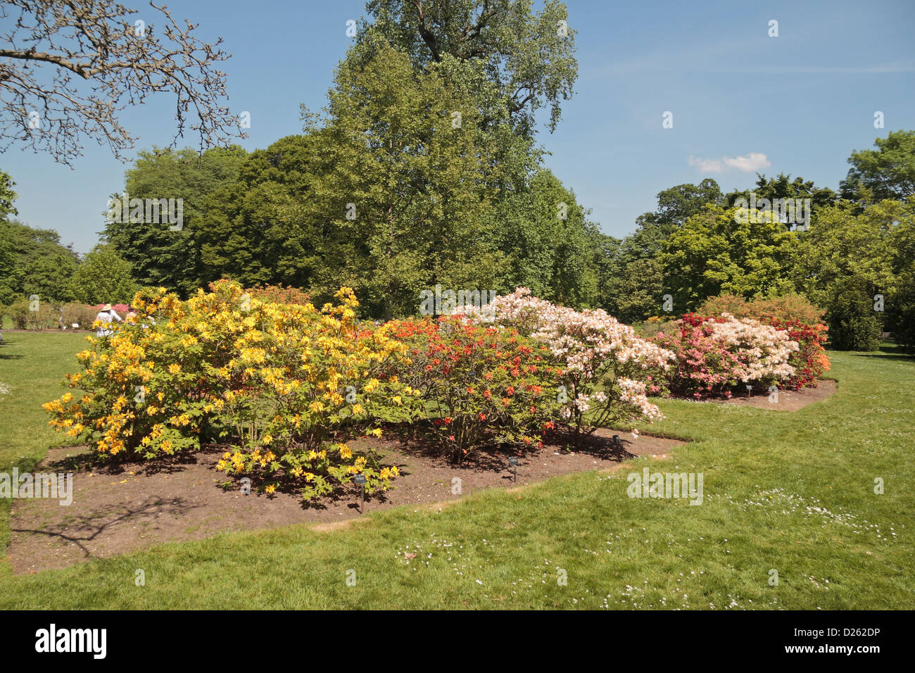 The Azalea Garden in The Royal Botanic Gardens, Kew, Surrey, England ...