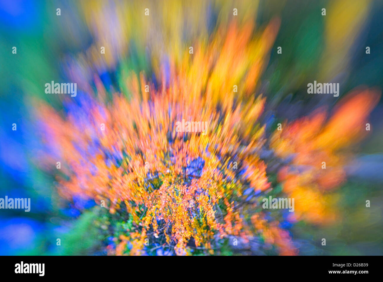 Stock Photograph Of Fall Color Abst - Stock Image