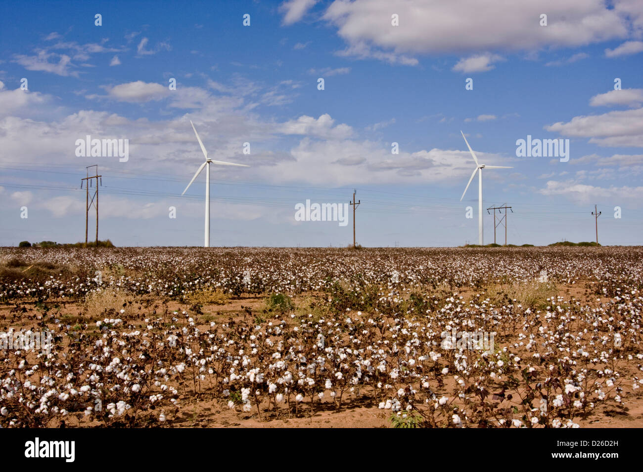 Wind generators and electrical transmission lines sit in a cotton field near Rosco, Texas, USA - Stock Image