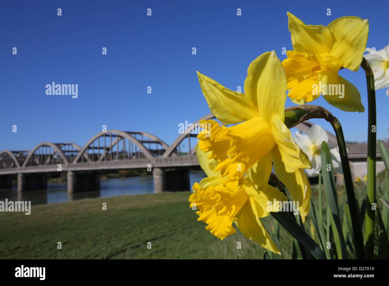 Balclutha Bridge in spring - Stock Image