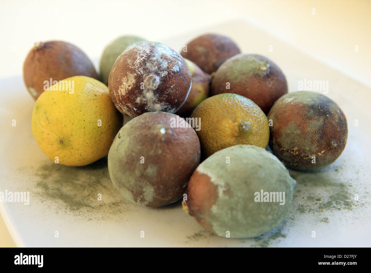 Limes turning brown and covered in blue green mould - Stock Image