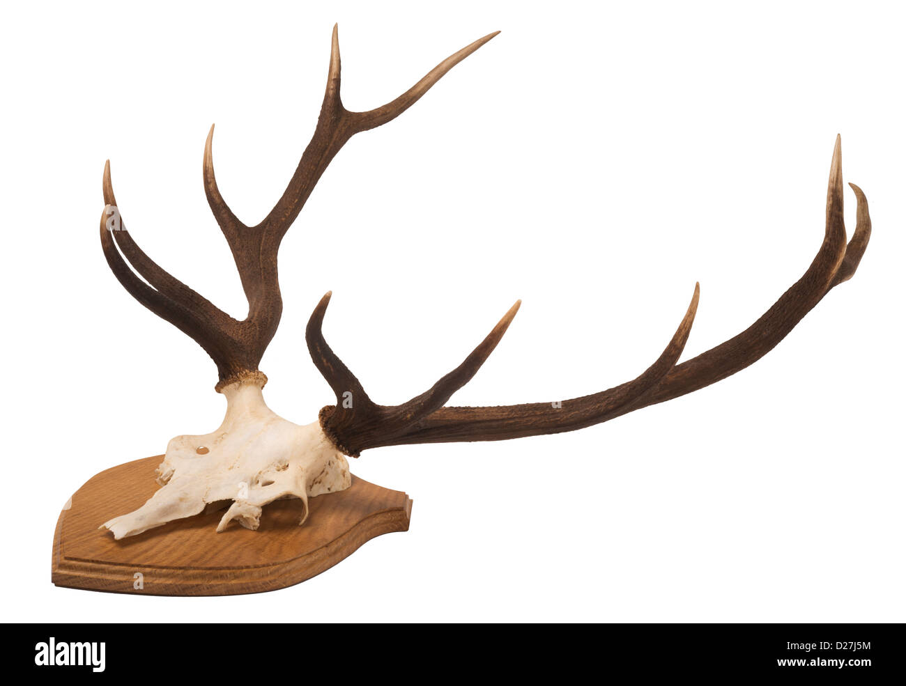 Bone Shield Stock Photos & Bone Shield Stock Images - Alamy