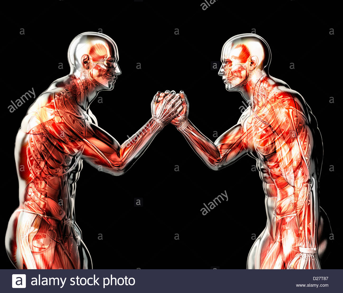 Male anatomical models arm wrestling on black background Stock Photo