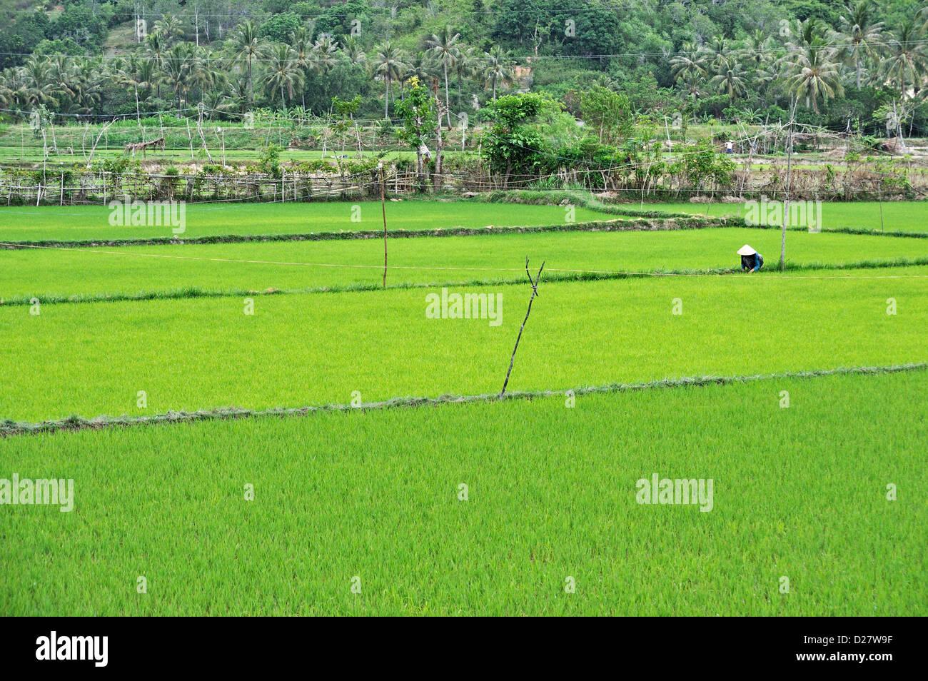 People working in rice fields near Hue, Vietnam Stock Photo