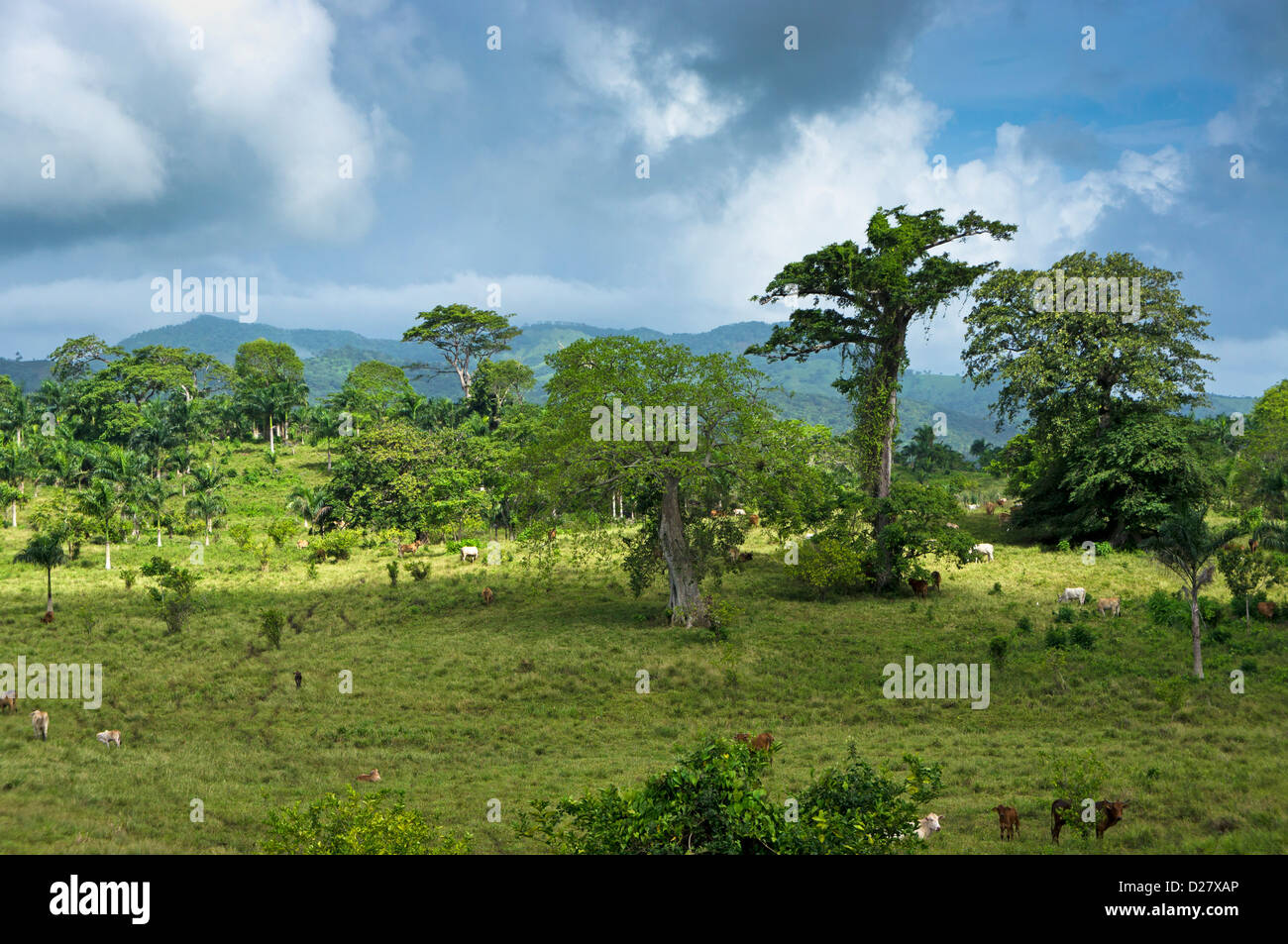 Countryside at Punta Cana, Dominican Republic, Caribbean - Stock Image
