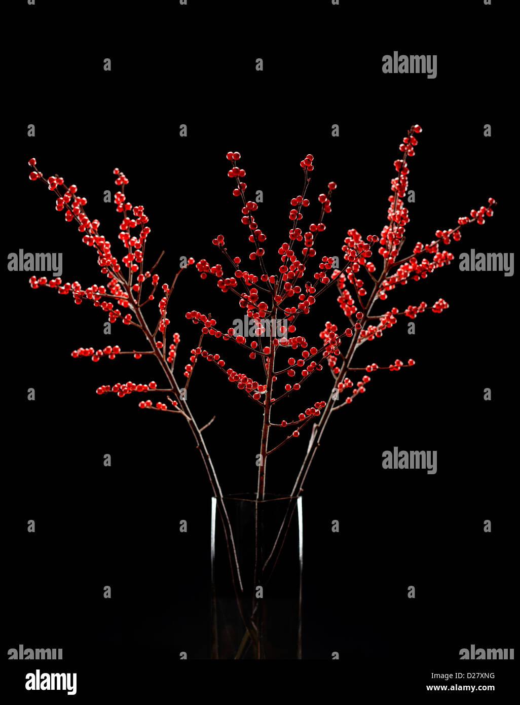 Arrangement of Red Winter Berries in Glass Vase on Black Background - Stock Image