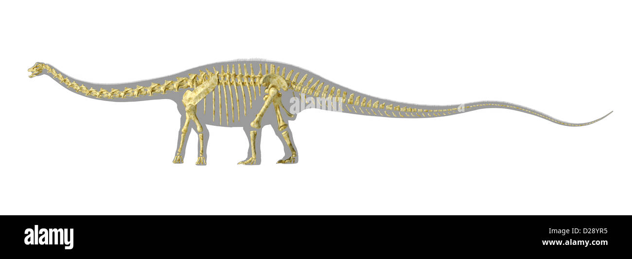 Diplodocus dinosaur silhouette, with full photo-realistic skeleton. On white background with clipping path. - Stock Image