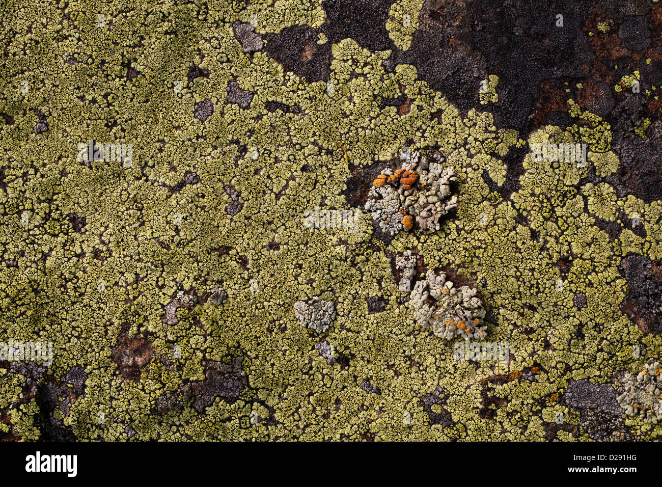 Fungi Algae Stock Photos Amp Fungi Algae Stock Images Alamy