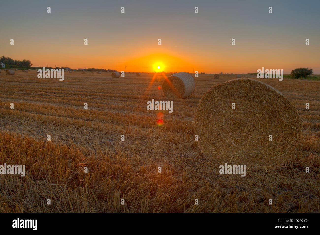 Fenland landscape at sunset. Large round straw bales in a recently harvested wheat field, Cambridgeshire, England. - Stock Image