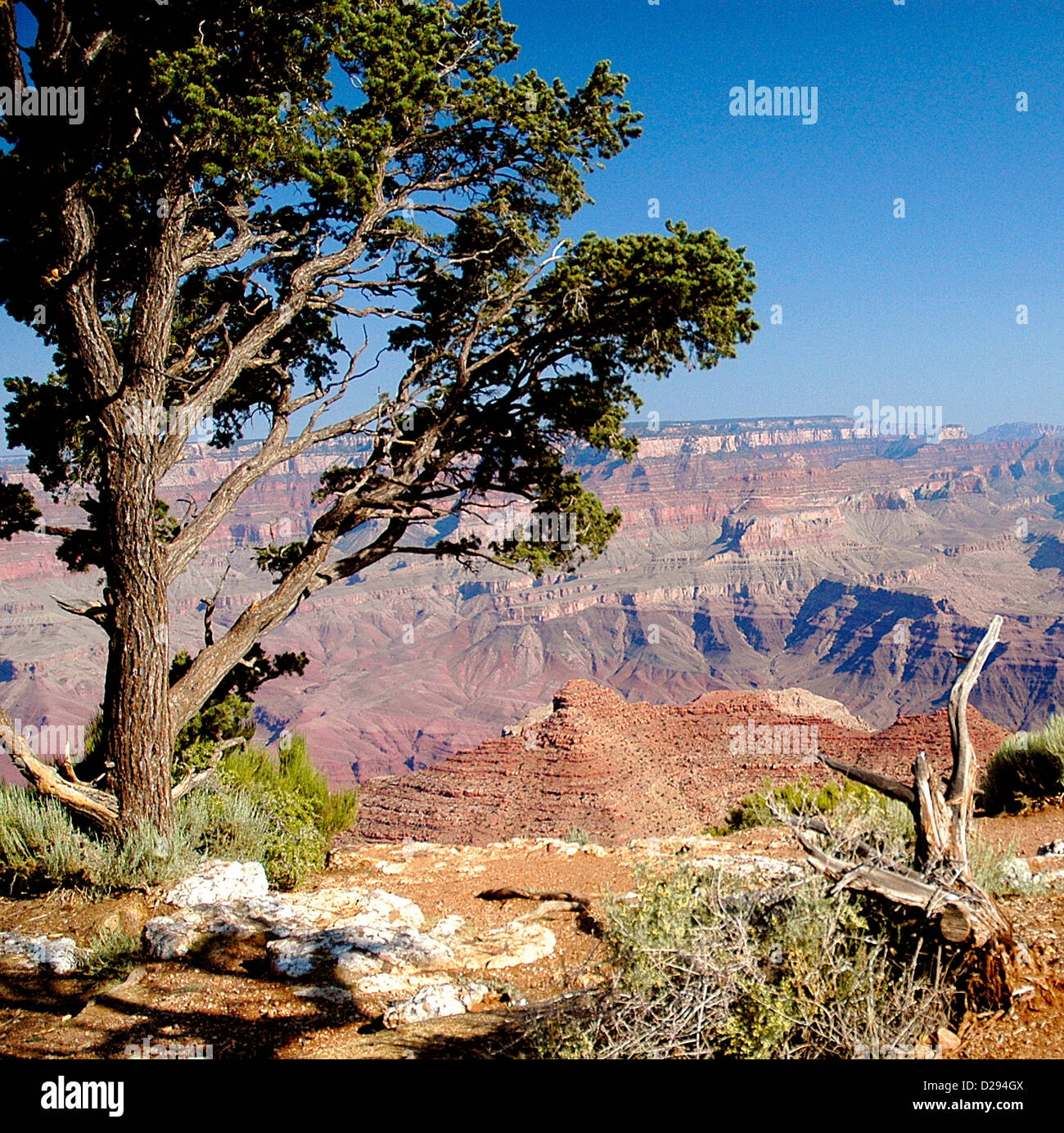 Grand Canyon National Park, Arizona, USA - Stock Image