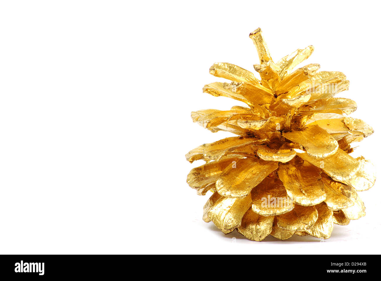 golden pine cone isolated on stock photos golden pine cone