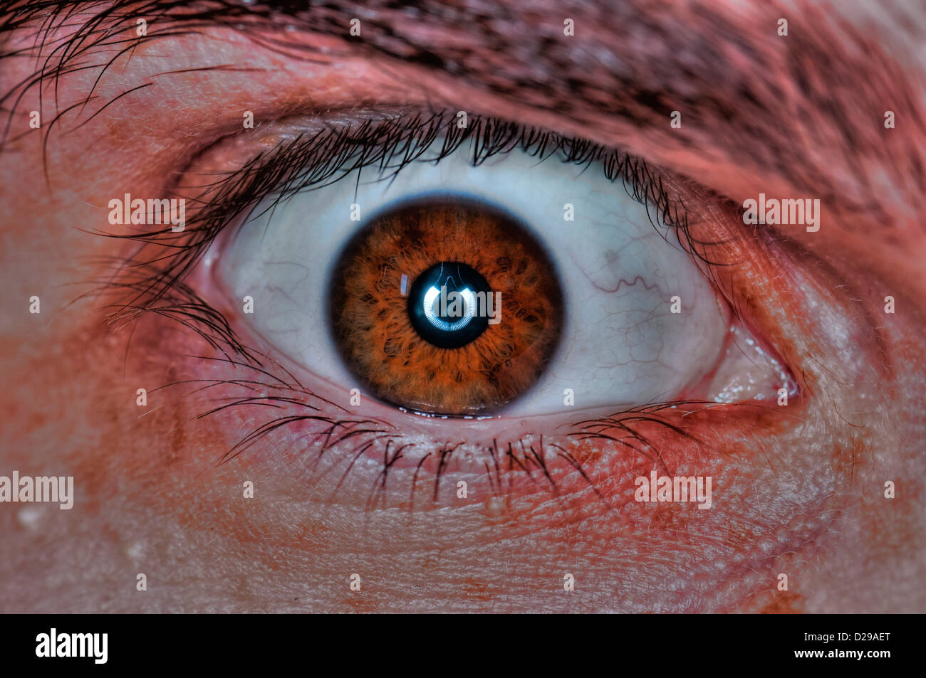 Extreme closeup of a human eye- Brown - Stock Image