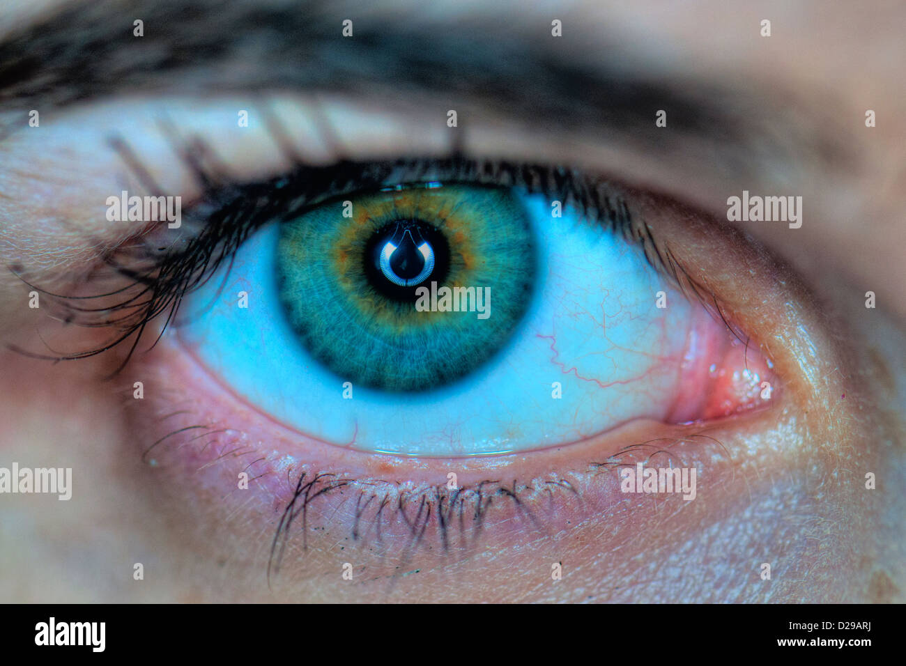 Extreme closeup of a human eye - Stock Image
