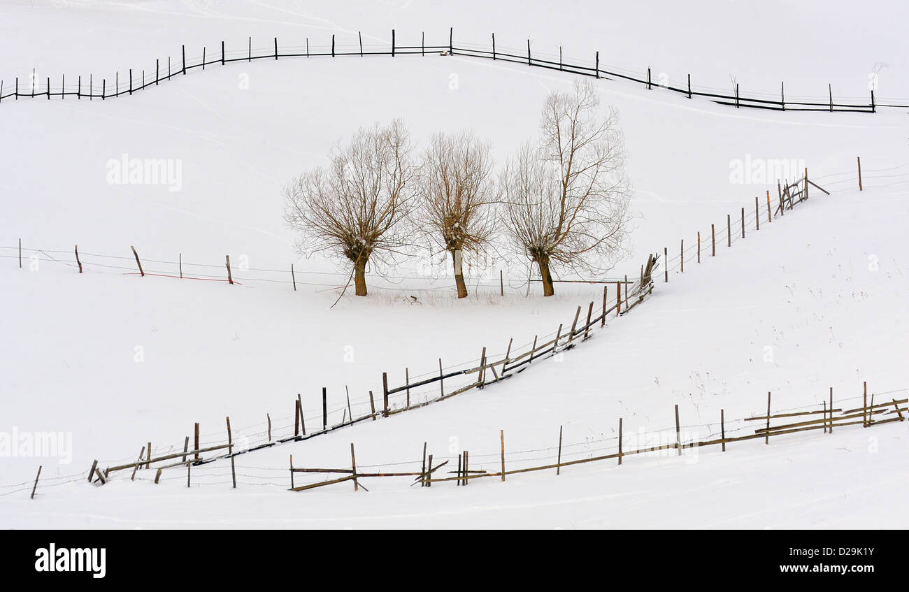 trees in winter time and fences - Stock Image