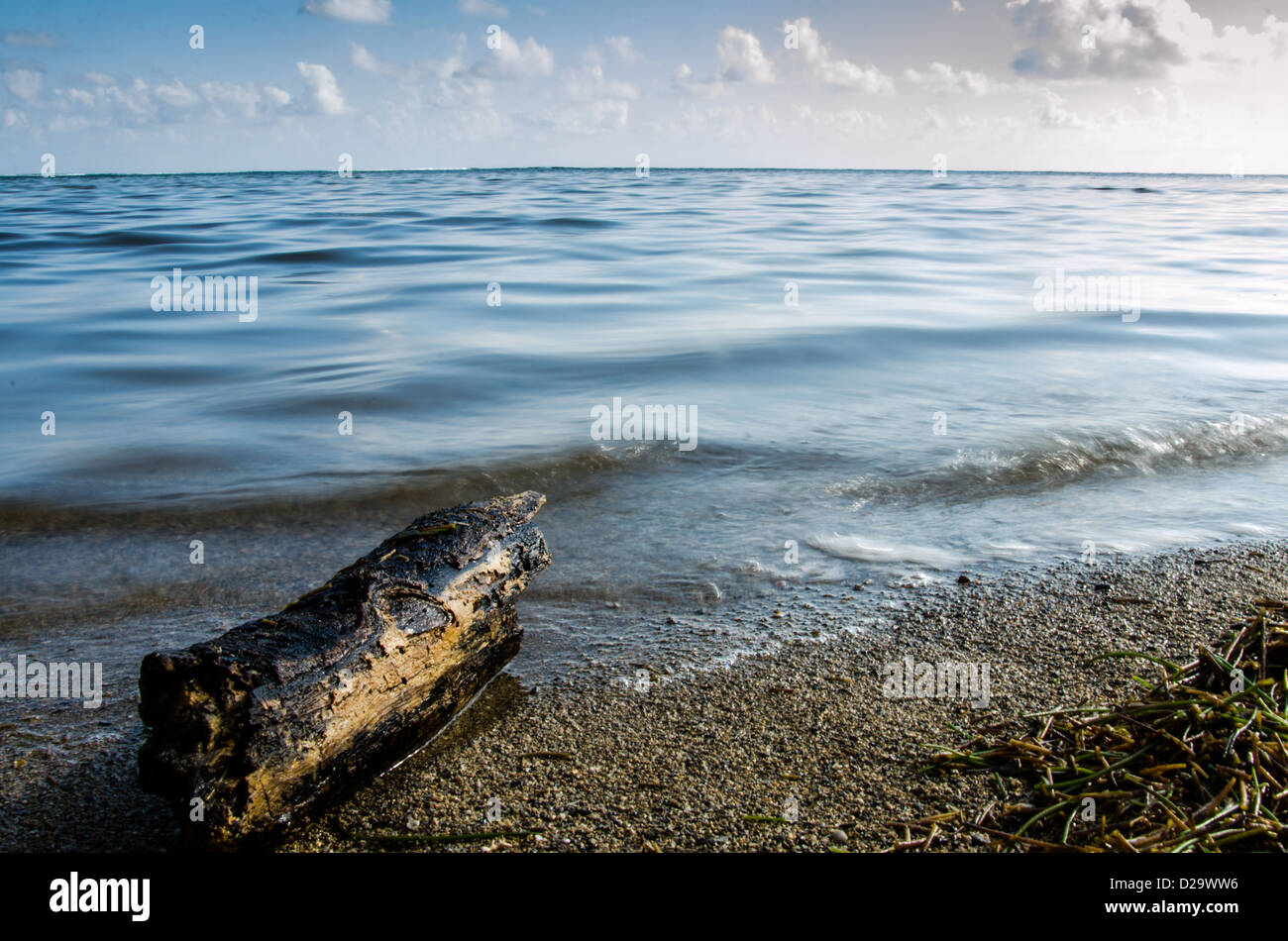 Log on Bel Ombre beach - Stock Image