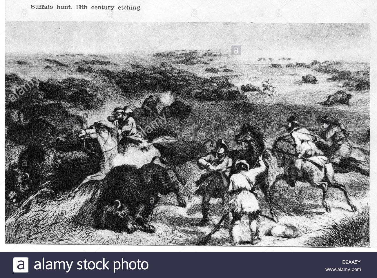 Buffalo Hunt. 19th century etching - Stock Image