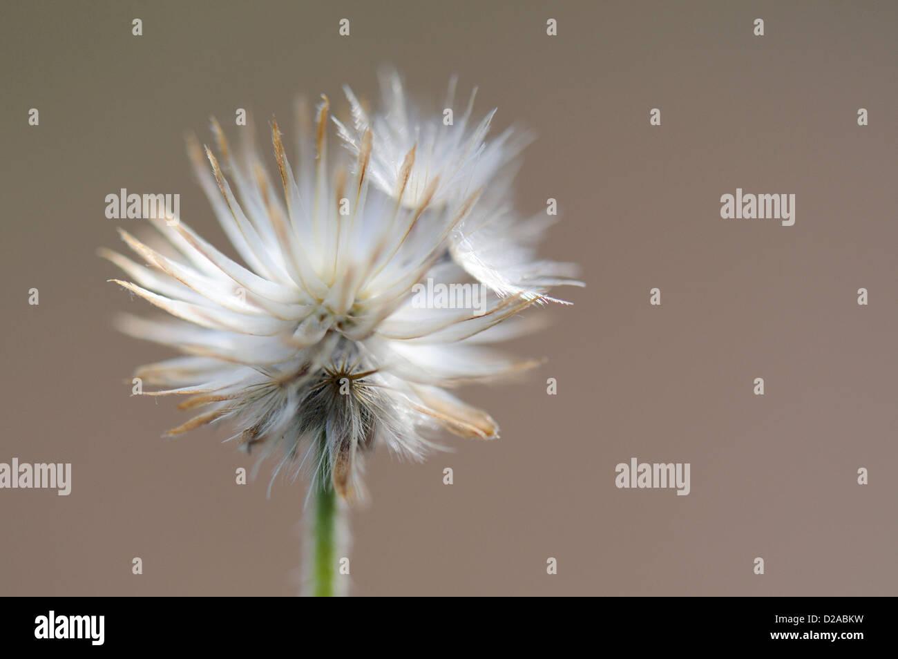 Wild white flowers india stock photos wild white flowers india white bright spiky flower stock image mightylinksfo