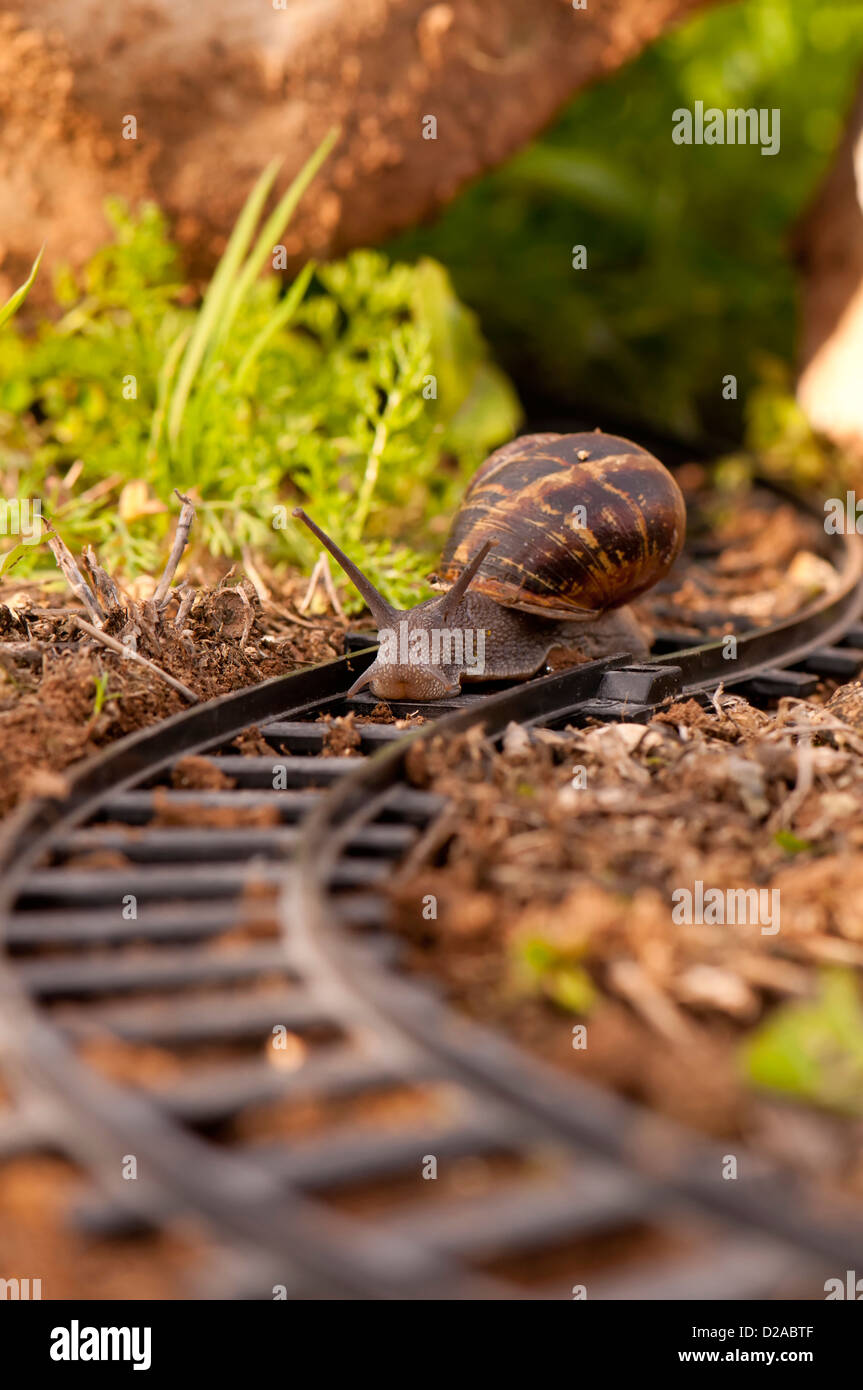 Snail moving along train tracks - Stock Image