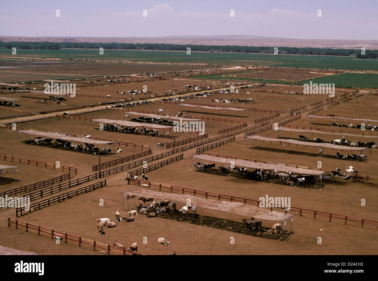 New Mexico Albuquerque Overview Of Dairy Cows At Dairy Farm Stock Photo Alamy