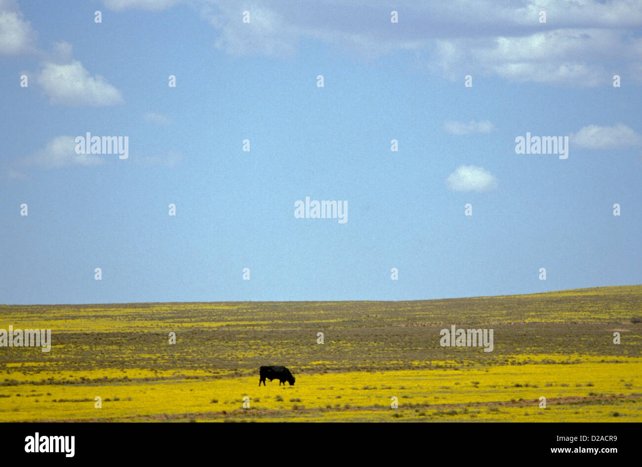 New Mexico, Eastern Plains Between Vaughn And Roswell - Stock Image