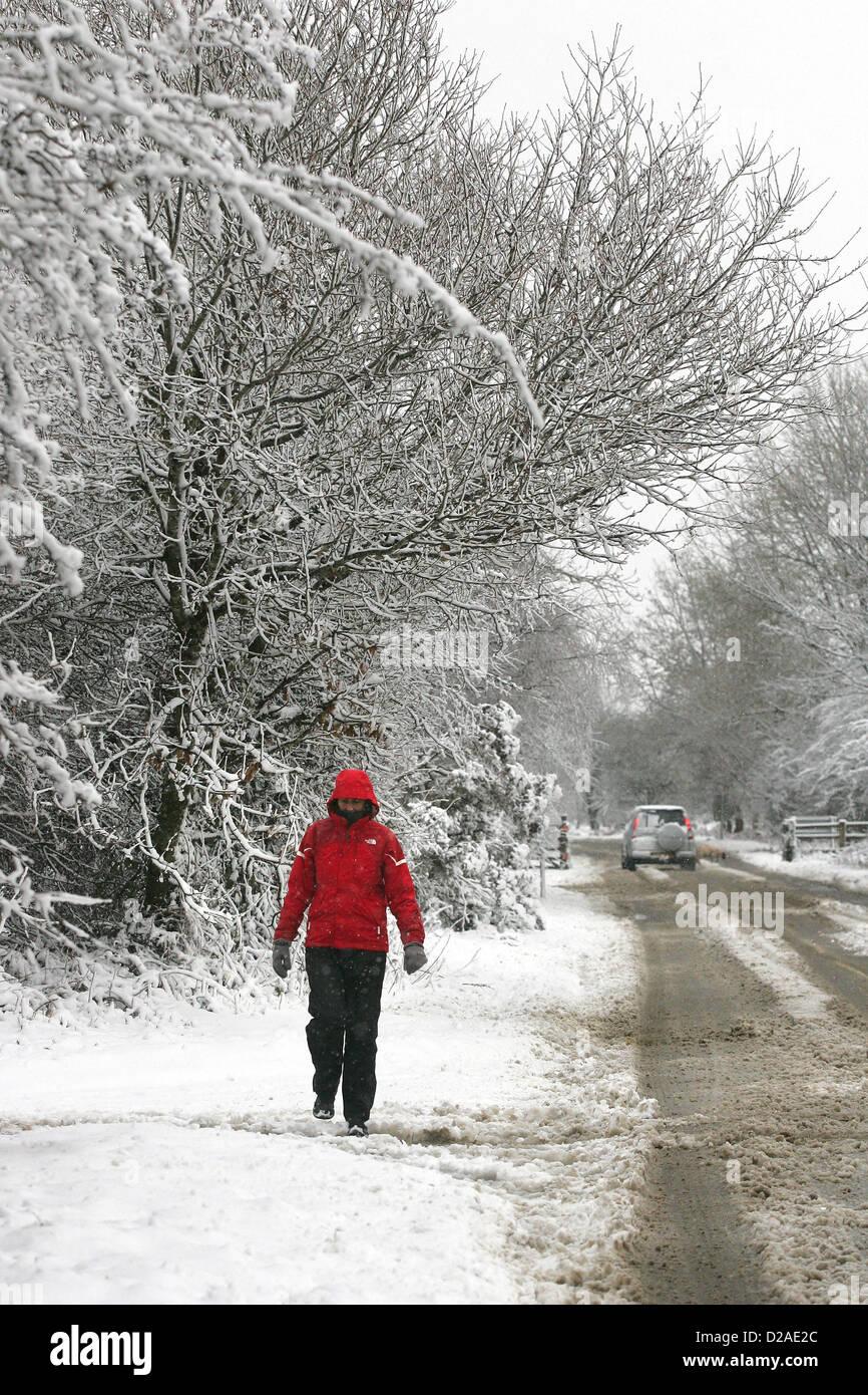 Yelverton, Devon, UK. 18th January 2013. A walker framed by snow covered trees on the edge of Dartmoor near Yelverton Stock Photo