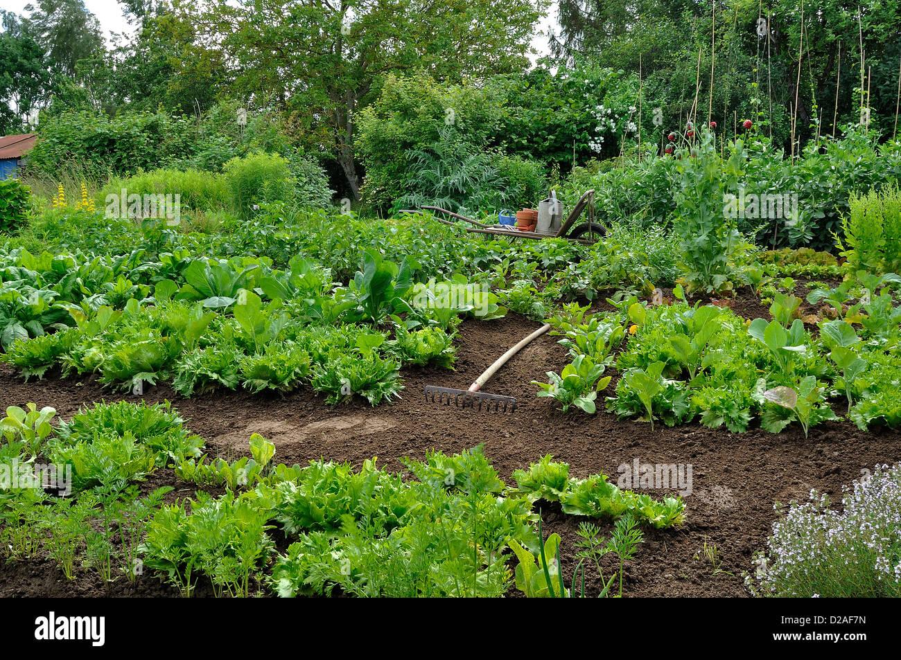 Planches De Legumes Du Jardin Potager Stock Photos Planches De