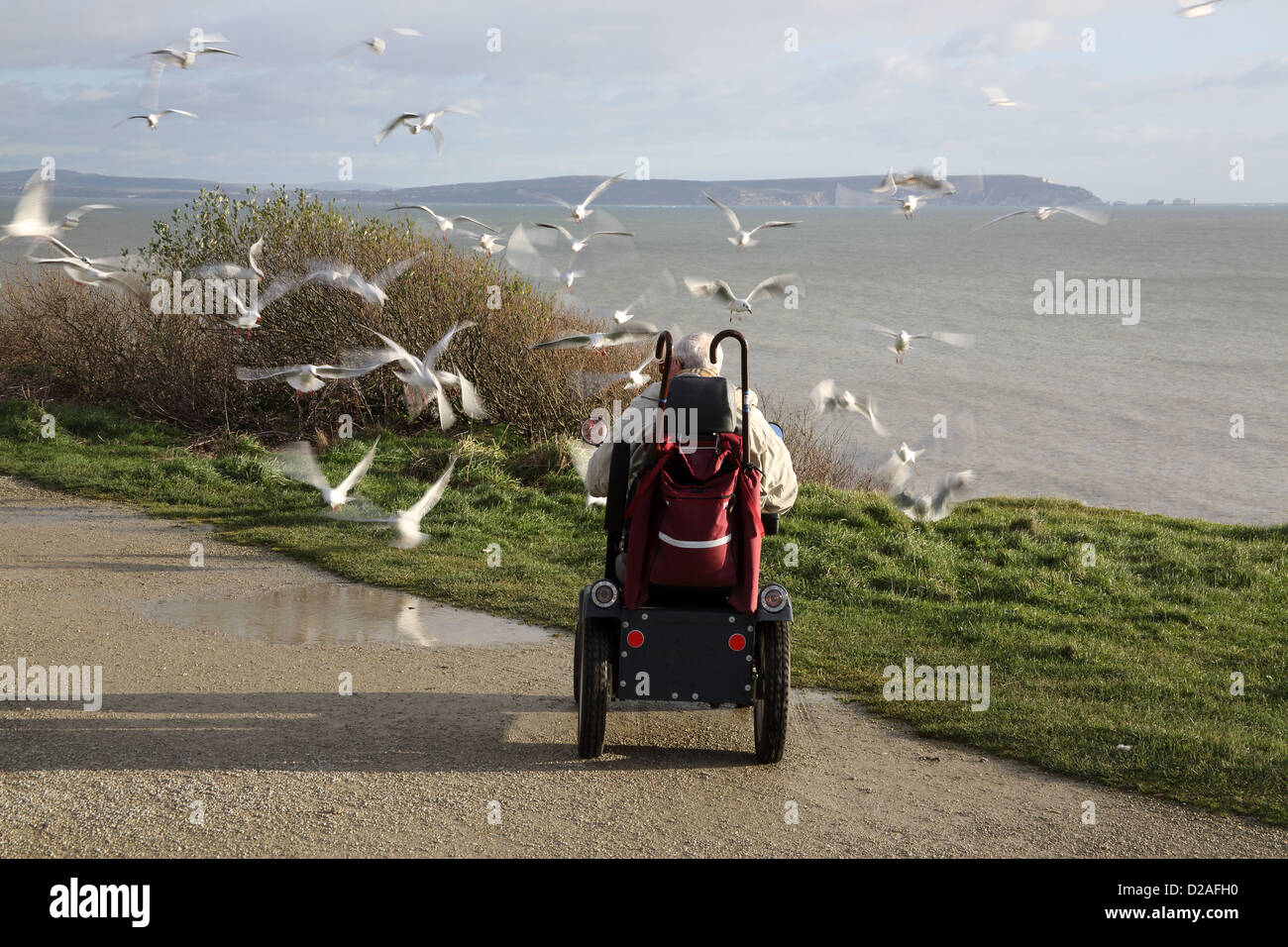 disabled person feeding seagulls at highcliff on the hampshire coast - Stock Image